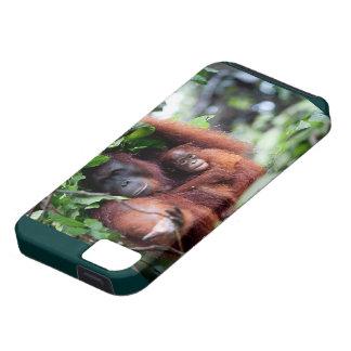 Mère et bébé d'orang-outan coque iPhone 5 Case-Mate