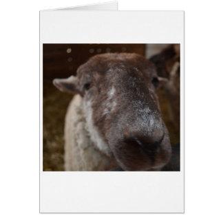 Mick, la carte de note de moutons d'île de porc