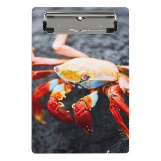 Mini Porte-bloc Crabe de lightfoot de sortie sur une roche noire
