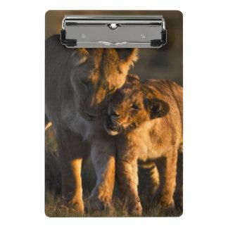 Mini Porte-bloc Lion CUB et mère