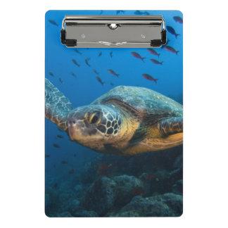 Mini Porte-bloc Noircissez la tortue (verte) (l'agassizi de