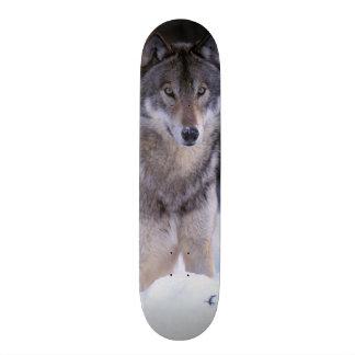 Mini Skateboard 18,4 Cm L'Amérique du Nord, Canada, Canada oriental, loup
