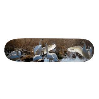 Mini Skateboard 18,4 Cm Planche à roulettes d'animaux de faune d'oiseaux