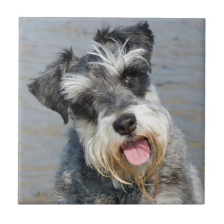 Miniatuur de hond leuke mooie foto van Schnauzer Tegeltje