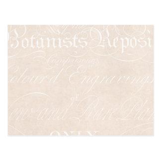 Modèle vintage de papier parcheminé de botaniste cartes postales