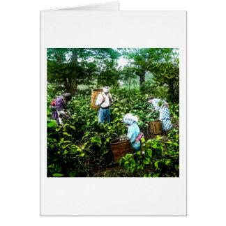 Moisson de vieux agriculteurs du Japon de feuilles Carte