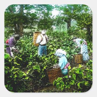 Moisson de vieux agriculteurs du Japon de feuilles Sticker Carré