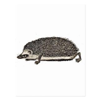 MON HÉRISSON d'ANIMAL FAMILIER - vous devriez Carte Postale