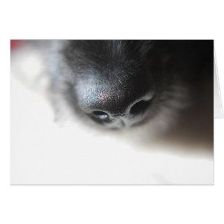 Mon nez de chiot de Lurcher de la carte | de nez