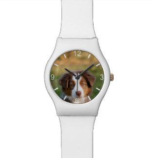Montre Chiot australien mignon de chien de berger -