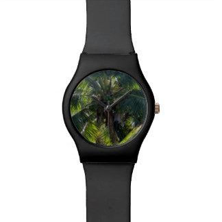 montre de palmier