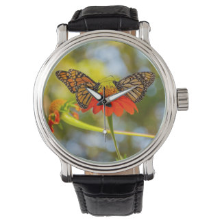 Montre Papillons de monarque sur un fleur sauvage