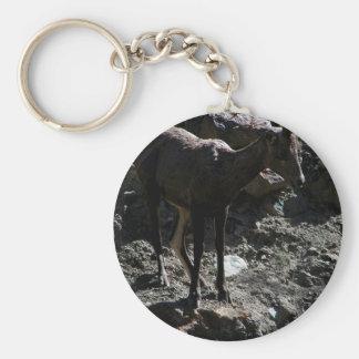 Mouflons d'Amérique de montagne rocheuse, brebis Porte-clés