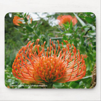 Mousepad - fleur de coussin de goupille de Protea Tapis De Souris