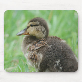 Mousepad poussins de canard Duckling - photo : JL Tapis De Souris