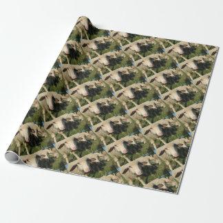 Moutons curieux papier cadeau