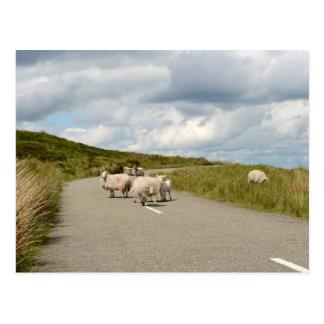 Moutons sur la route en carte postale de l'Irlande