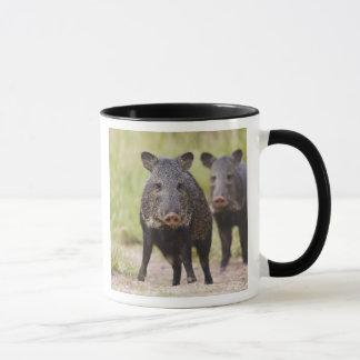 Mug Adultes colletés de tajacu de Pecari de Peccary),