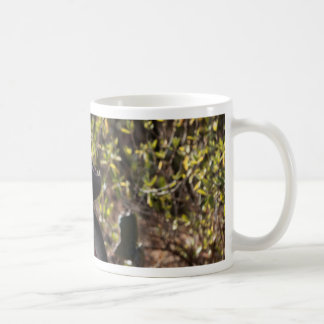 Mug Babouin masculin de gelada (gelada de
