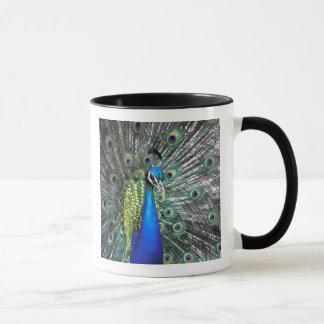Mug Beau paon écartant les plumes colorées