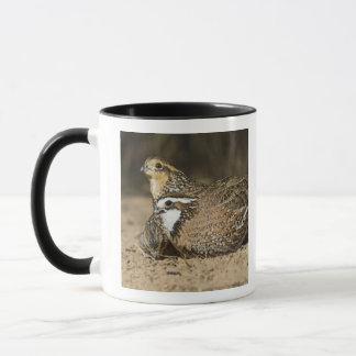 Mug Bébés du nord de cailles à l'étang pour la boisson