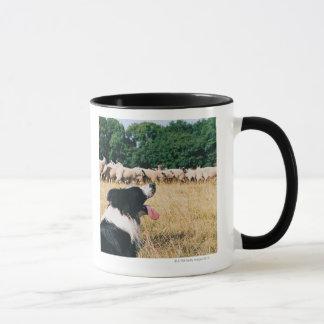 Mug Border collie observant des moutons
