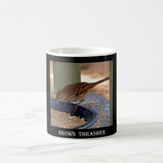 Mug Brown Thrasher (la Géorgie)