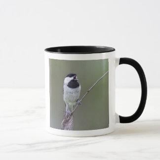 Mug Chant de chickadee de Caroline