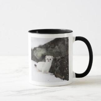 Mug chasse Court-coupée la queue de belette pour des