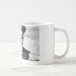 Mug Chiot de border collie