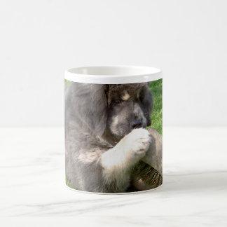Mug Chiot de mastiff tibétain avec le balai