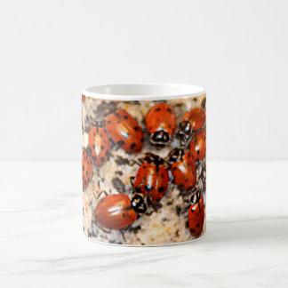 Mug Coccinelles