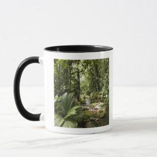 Mug courant dans la forêt tropicale, Dominique