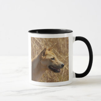 Mug Dingo (dingo de lupus de Canis)