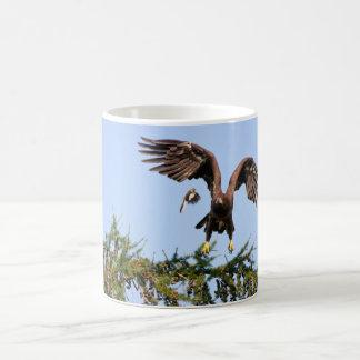Mug Eagle chauve chassé par un moqueur