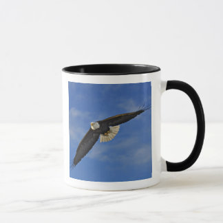 Mug Eagle chauve en vol, leucocephalus de Haliaetus,