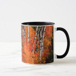 Mug Érable rouge (Acer Rubra) et trembles
