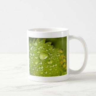 Mug Gouttelettes de pluie sur une feuille verte