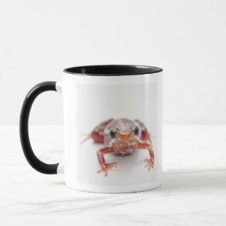 Mug grenouille blanc-rayée de dard de poison