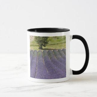 Mug La France, Provence. Rangées de lavande en fleur