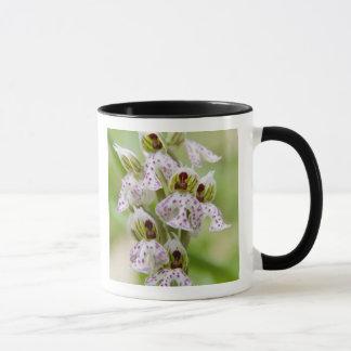 Mug La Grèce, Crète. Orchidée en fleur Orchis