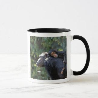 Mug L'AFRIQUE, Tanzanie, Gombe NP, chimpanzés.