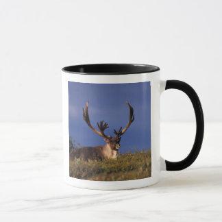 Mug L'Amérique du Nord, Etats-Unis, Alaska,
