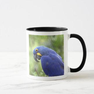Mug L'Amérique du Sud, Brésil, Pantanal. Les 2 mis en