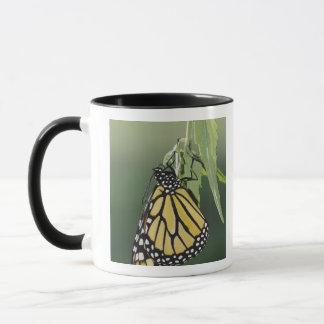 Mug Le monarque, plexippus de Danaus, adulte a