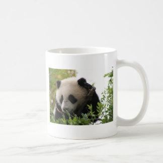 Mug Le Su Lin, petit animal d'ours panda géant au zoo