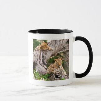Mug Léopard adulte (Panthera Pardus) CUB
