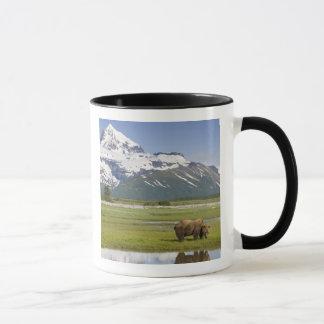 Mug Les Etats-Unis, Alaska, parc national de Katmai,