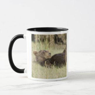 Mug LES Etats-Unis. L'Alaska. Petit animal d'ours