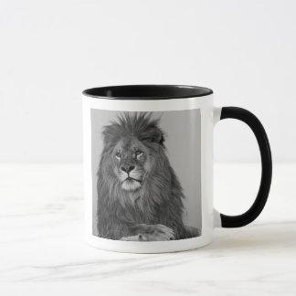 Mug Lion africain se reposant sur la falaise de roche